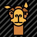 camel, zoo, animal, wildlife, curious