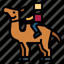 camel, zoo, animal, wildlife, dessert