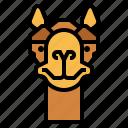 camel, zoo, animal, wildlife, happy