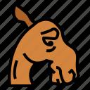camel, zoo, animal, wildlife, sad