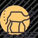 adventure, camel, desert, ride, tourism, travel, vacation