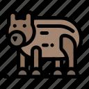 animal, bear, canada, polar icon