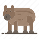 animal, bear, canada, polar