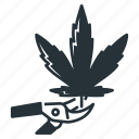harvesting, cannabis, clipping, leaf, marijuana, shears, trimming icon