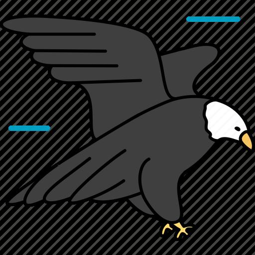 bird, cartoon animal, cartoon animals, cartoon hawk, ecology, hawk, nature, zoo icon