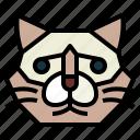 birman, cat, breeds, animal, pet