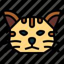 cat, breeds, pet, animal, mammal