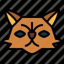 persian, cat, breeds, animal, pet