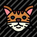 turkish, cat, breeds, animal, pet