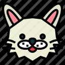 turkish, angora, cat, breeds, animal, pet