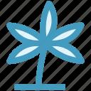 anemone, eco, flower, nature, spring flower