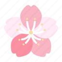 sakura, cherry, blossoms, spring, flower, bloom, blooming