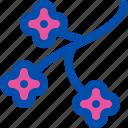 blossom, branch, cherry, flower, japan