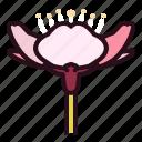sakura, cherry, blossom, spring, flowers, blooming