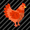 bird, chicken, chicken coop, domestic, farm