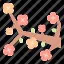 botanical, china, flower, meai, nature, oriental