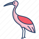 crane, bird