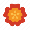 blooming, chinese, floral, flower, nature