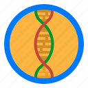 biology, dna, gene, genetic, science icon