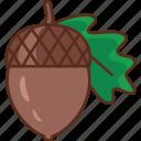 acorn, hazelnut, nut