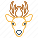 animal, christmas, deer, mammal, reindeer