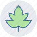 leaf, nature, christmas, decoration, easter, xmas, maple