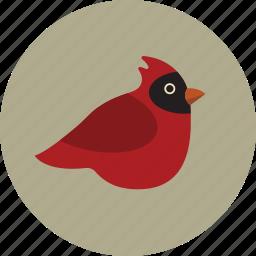 animal, bird, cardinal icon
