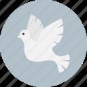 bird, christmas, dove, peace icon