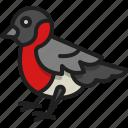 bullfinch, bird, wildlife, animal, winter, wing
