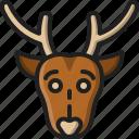 reindeer, head, wildlife, animal, winter, christmas, deer