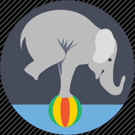 cirque, elephant circus, elephant fair, elephant show, equilibristic, show icon
