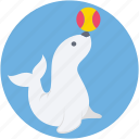 dolphin, dolphin circus, dolphin playing, fish, fish playing