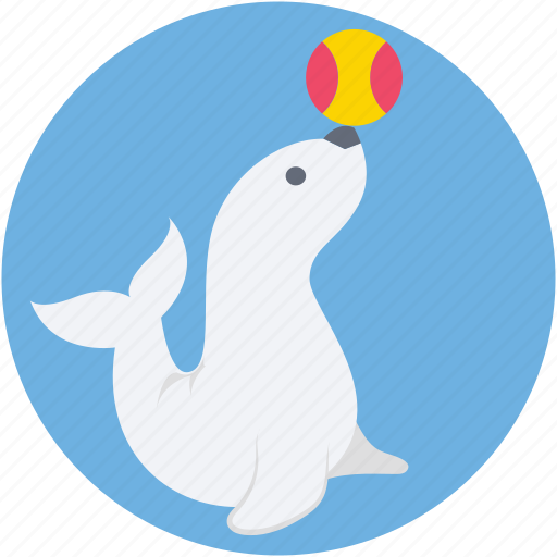 dolphin, dolphin circus, dolphin playing, fish, fish playing icon
