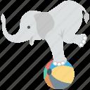 elephant show, circus elephant, elephant taming, animal, ball