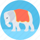 animal, animal show, circus animal, circus elephant, performance icon