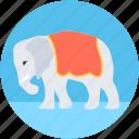 animal, animal show, circus animal, circus elephant, performance