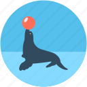 animal, circus seal, circus show, circus trick, sea lion icon