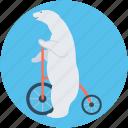 animal, bike, circus animal, circus bear, circus show
