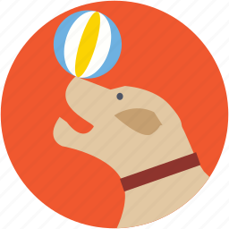 animal, ball, circus dog, fairground, fun icon