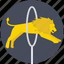 circus, fire hoop, hoop, lion, lion jumping