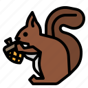 animal, mammal, rodent, squirrel, wild icon