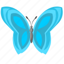 blue, butterfly, colored, wings