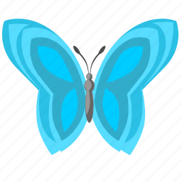 blue, butterfly, colored, wings icon
