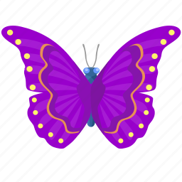 butterfly, colored, insect, wings icon