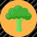 broccoli, cook, diet, greens, health, vegetable
