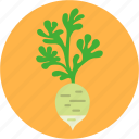 cook, daikon, diet, greens, health, vegetable, white radish icon