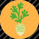 cook, daikon, diet, greens, health, vegetable, white radish
