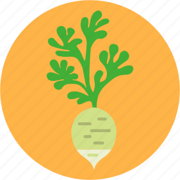 cook, daikon, diet, greens, health, vegetable, white radish icon