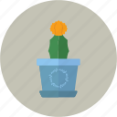 cactus, desk, florist, flower shop, flowerpot, pot icon