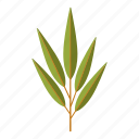 botany, leaf, nature, plant, tree, willow icon
